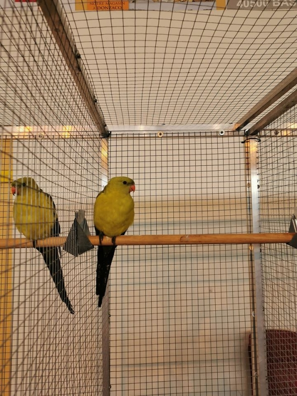 Championnat régional d'oiseaux exotiques à POYARTIN près de DAX